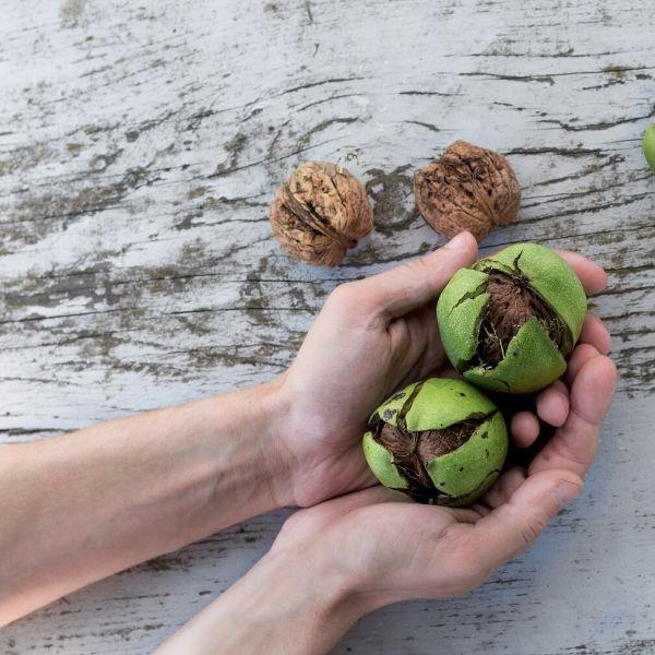 francesca-valmassoi-walnut-fiorediBach